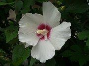 0407_flower1.jpg