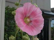 0407_flower2.jpg