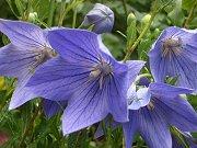 0407_flower3.jpg