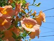 0407_flower4.jpg
