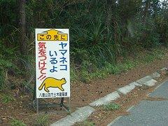 0411_yamaneko1.jpg