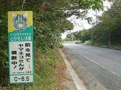 0411_yamaneko2.jpg