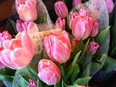 0501_tulip