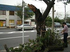 sakuratree.jpg