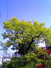 shinryoku.jpg
