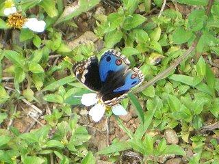 batterfly1.jpg