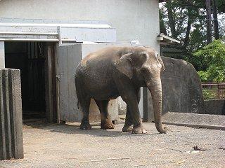 小田原城の象